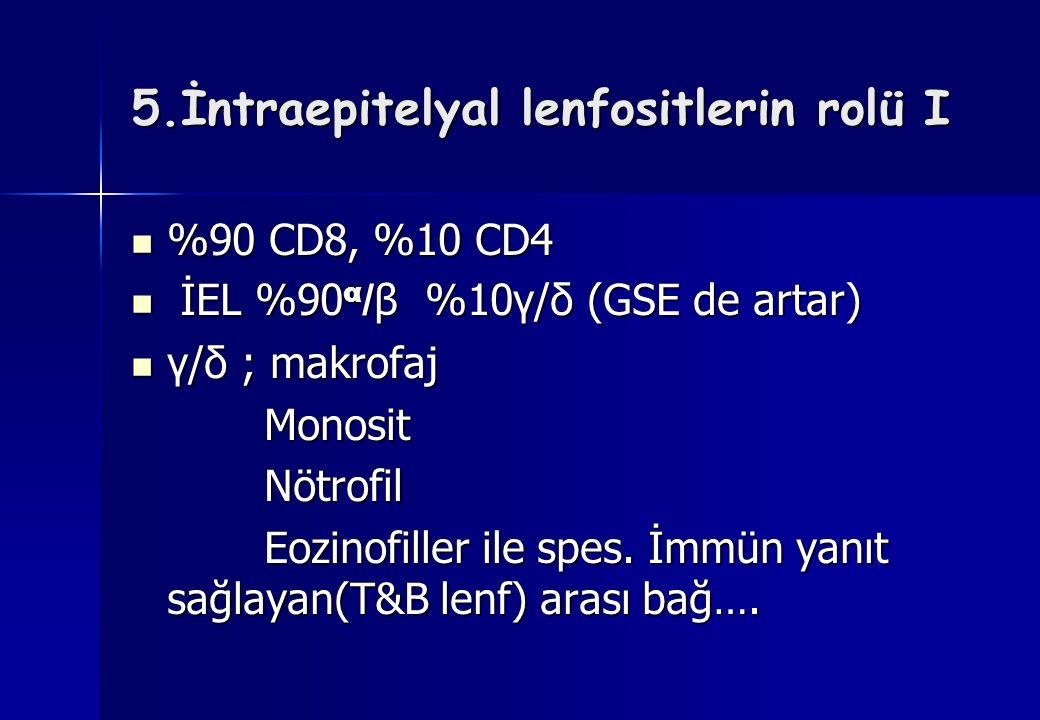 5.İntraepitelyal lenfositlerin rolü I