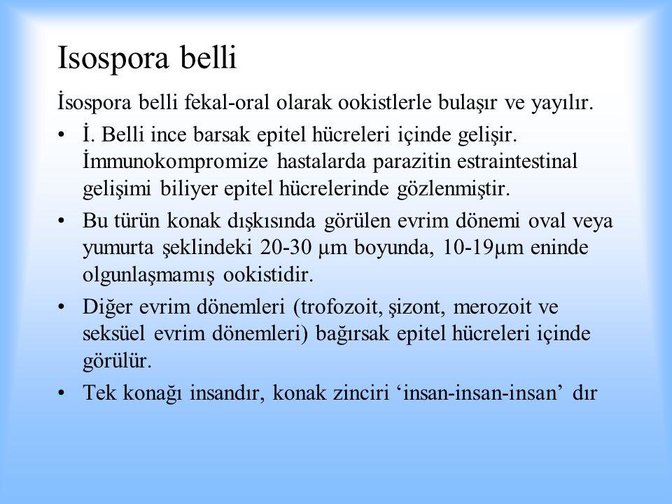 Isospora belli İsospora belli fekal-oral olarak ookistlerle bulaşır ve yayılır.