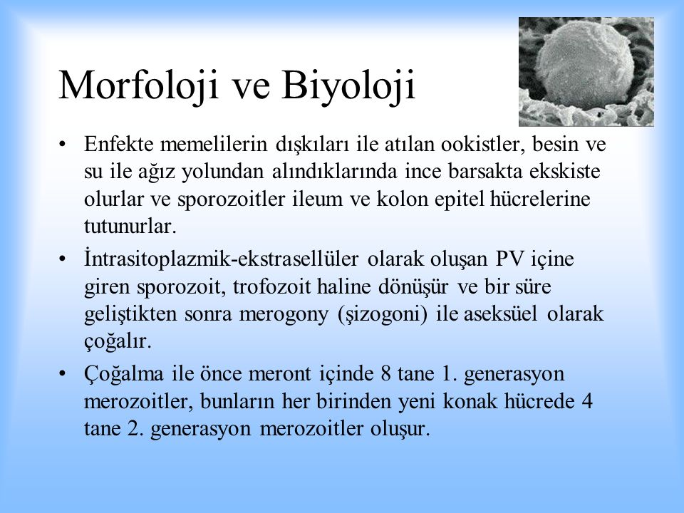 Morfoloji ve Biyoloji
