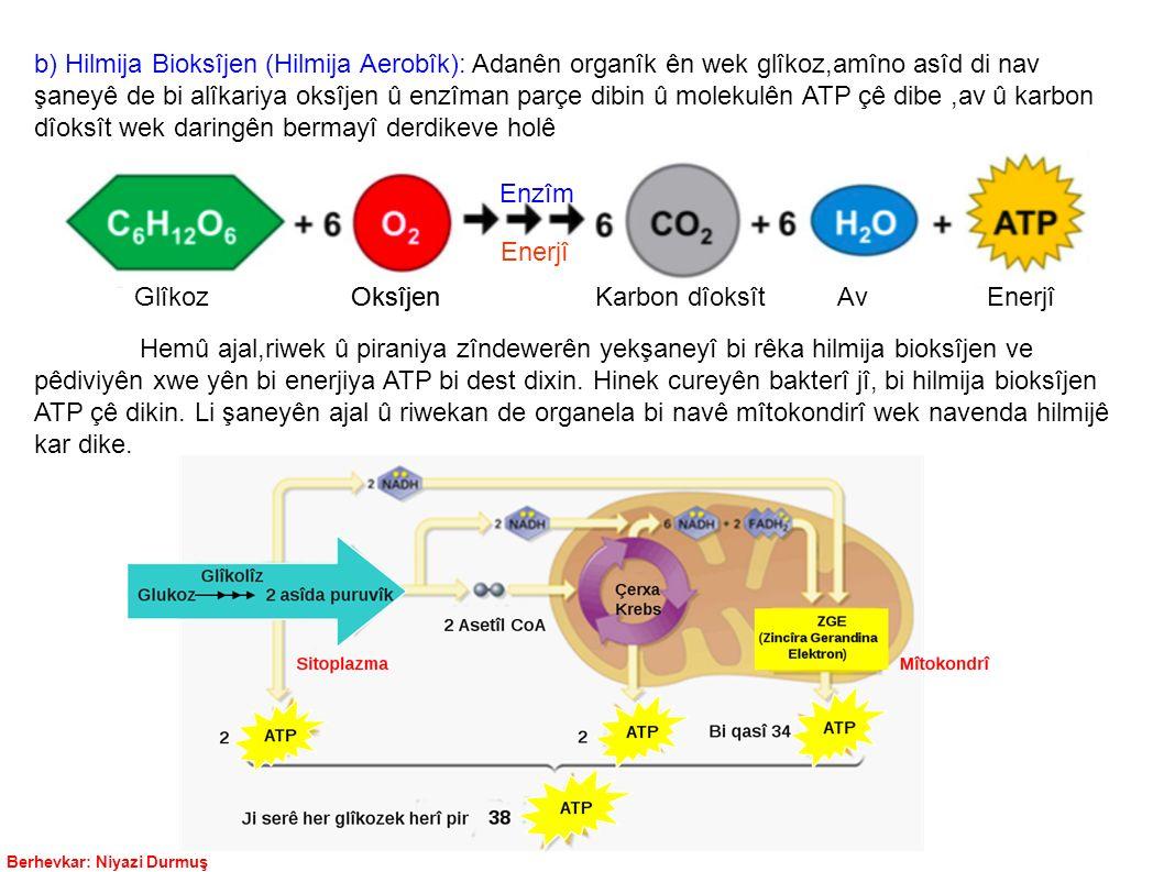b) Hilmija Bioksîjen (Hilmija Aerobîk): Adanên organîk ên wek glîkoz,amîno asîd di nav şaneyê de bi alîkariya oksîjen û enzîman parçe dibin û molekulên ATP çê dibe ,av û karbon dîoksît wek daringên bermayî derdikeve holê