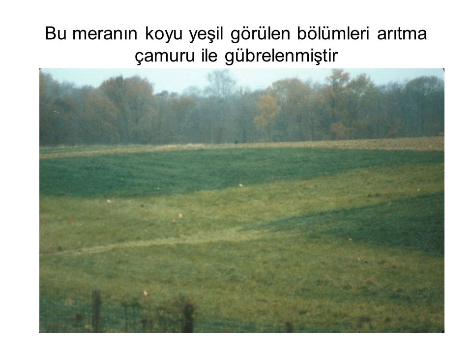 Bu meranın koyu yeşil görülen bölümleri arıtma çamuru ile gübrelenmiştir