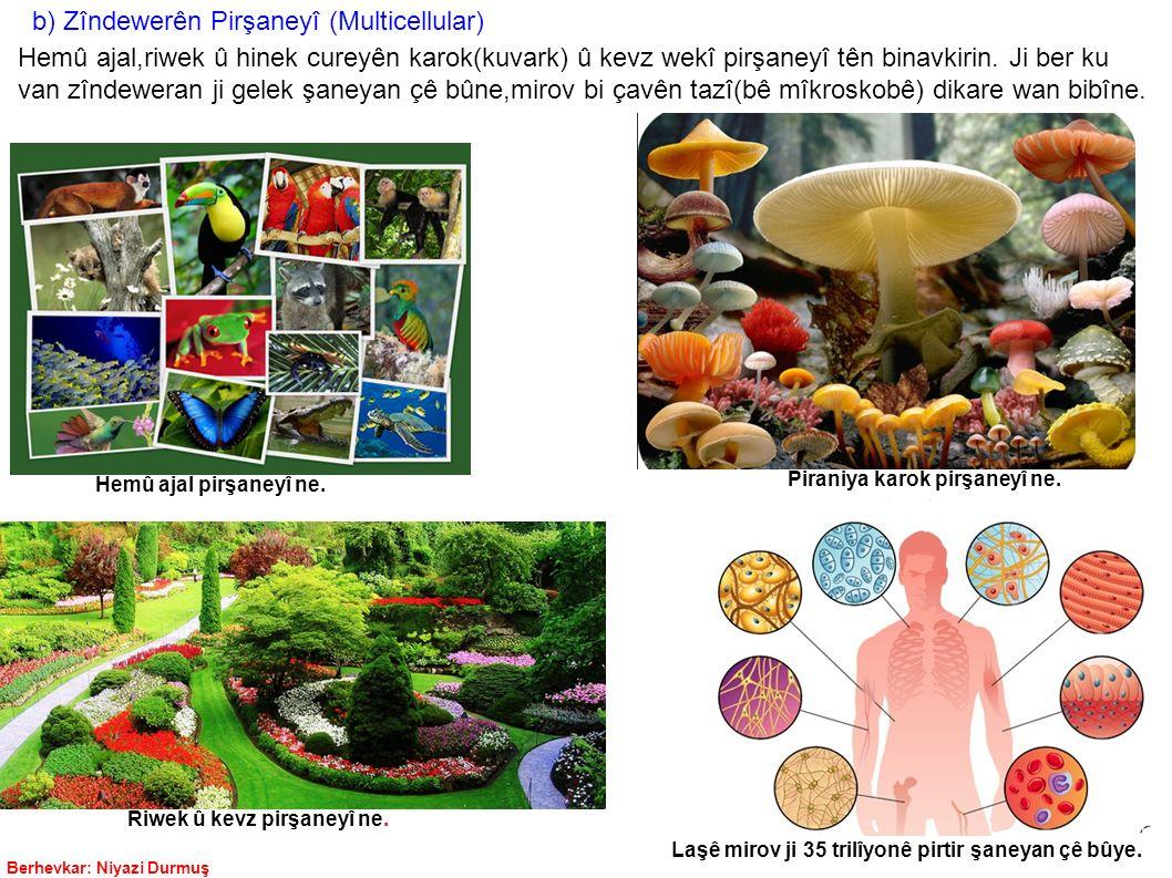 b) Zîndewerên Pirşaneyî (Multicellular)