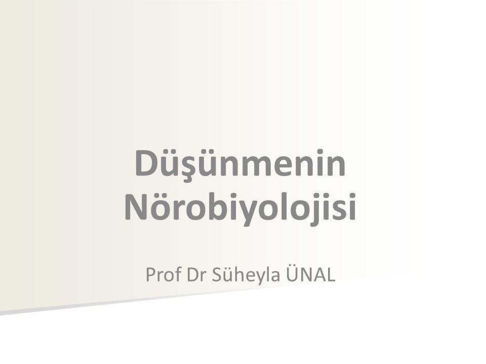 Düşünmenin Nörobiyolojisi Prof Dr Süheyla ÜNAL