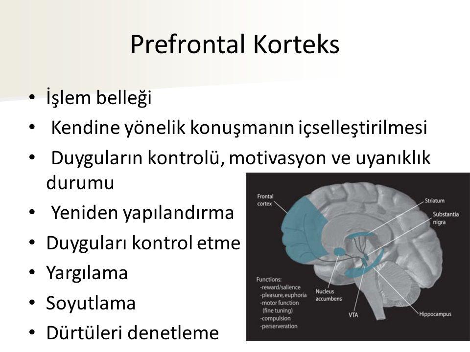 Prefrontal Korteks İşlem belleği