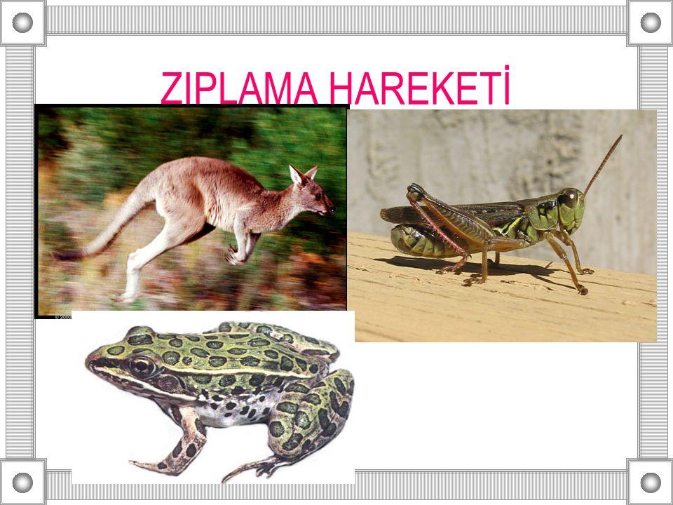ZIPLAMA HAREKETİ