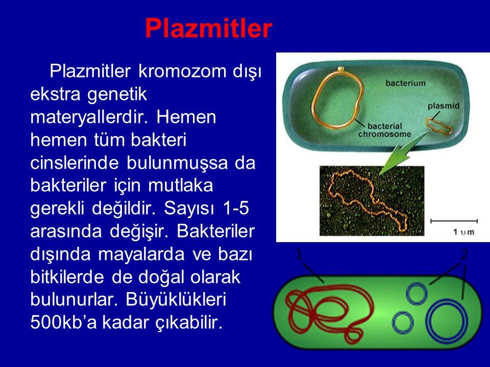 Plazmitler
