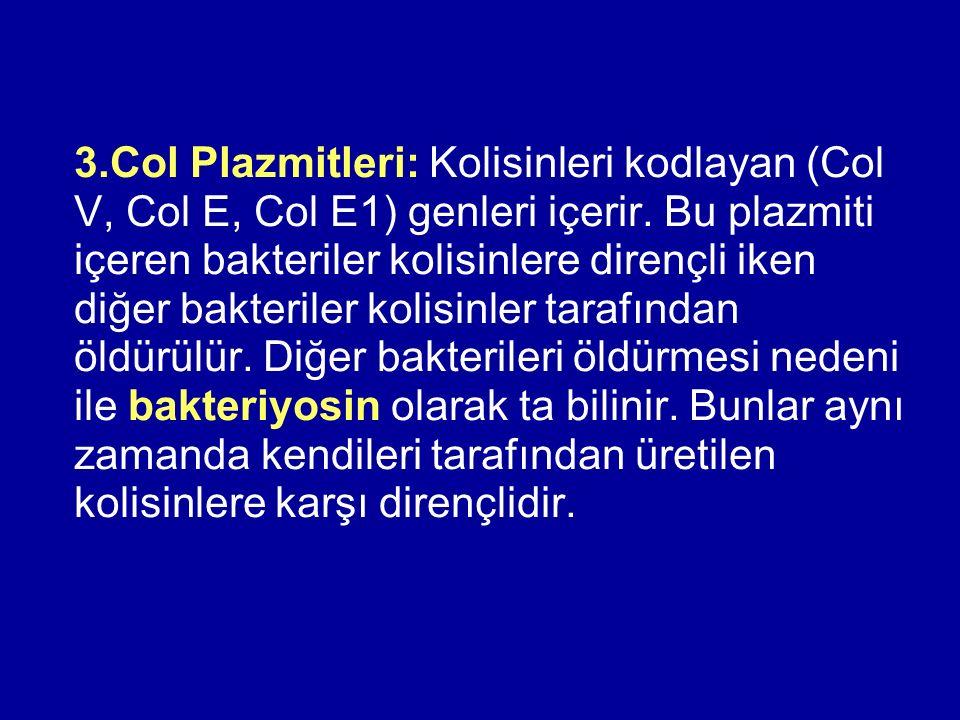 3.Col Plazmitleri: Kolisinleri kodlayan (Col V, Col E, Col E1) genleri içerir.