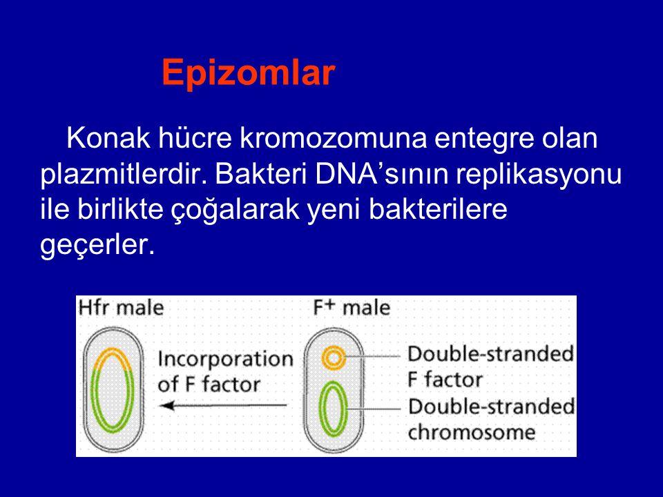 Epizomlar Konak hücre kromozomuna entegre olan plazmitlerdir.