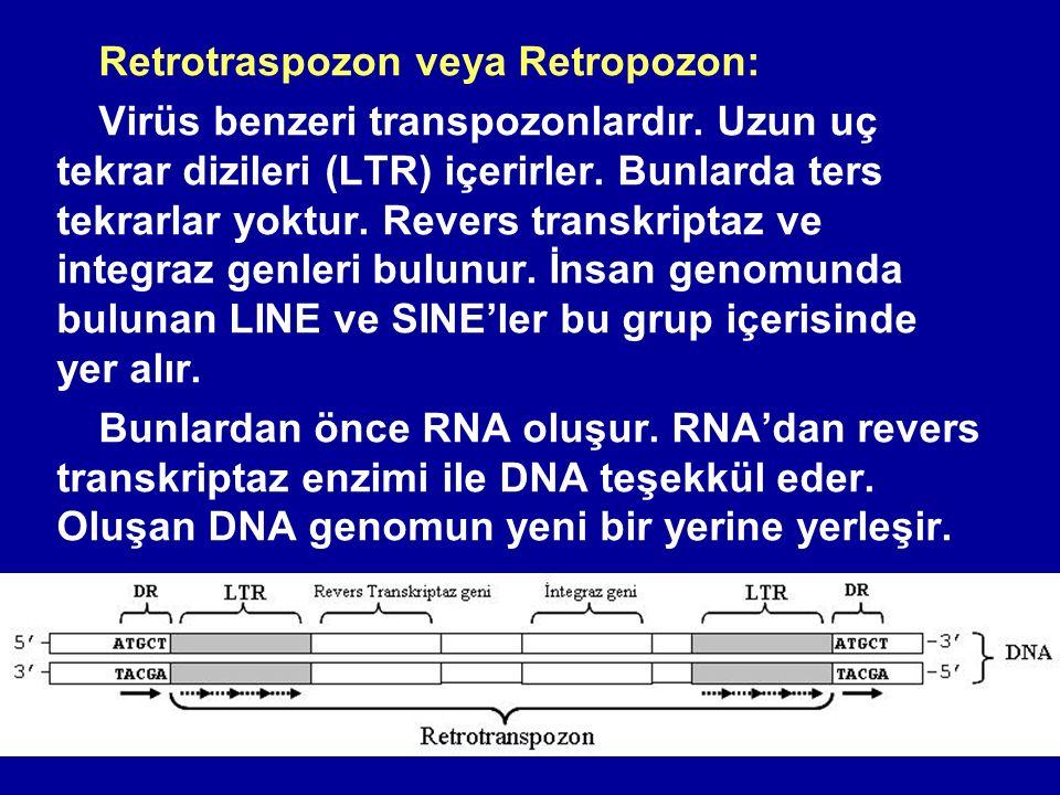 Retrotraspozon veya Retropozon: