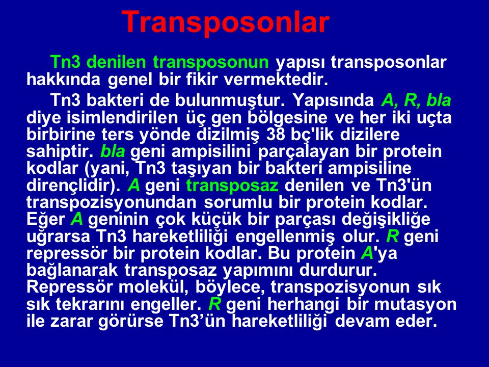 Transposonlar Tn3 denilen transposonun yapısı transposonlar hakkında genel bir fikir vermektedir.