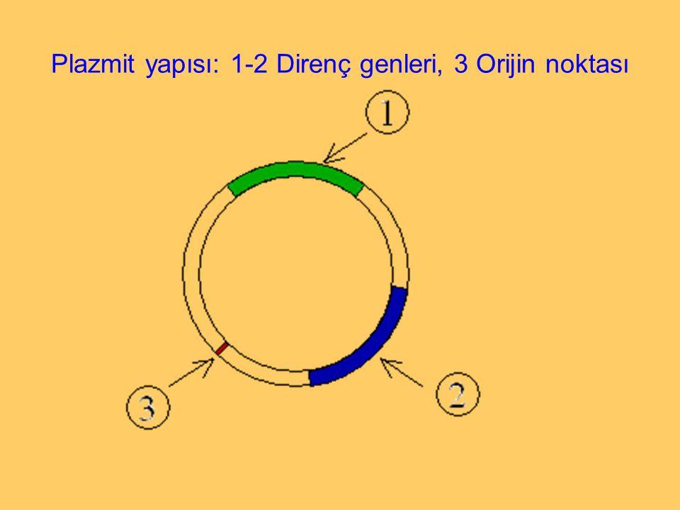 Plazmit yapısı: 1-2 Direnç genleri, 3 Orijin noktası