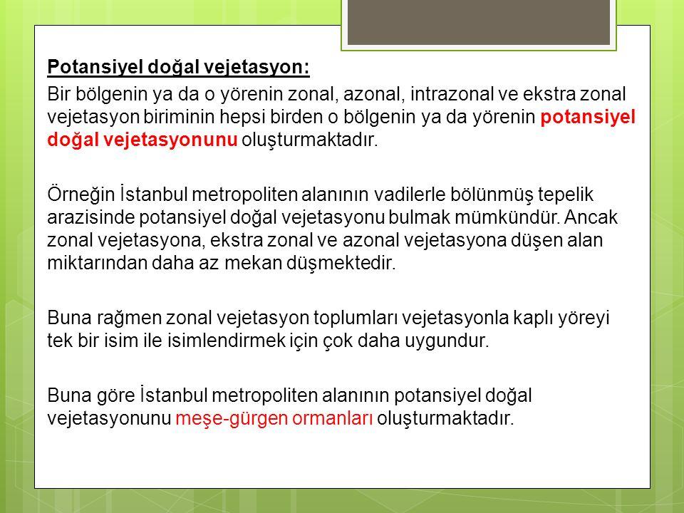 Potansiyel doğal vejetasyon: