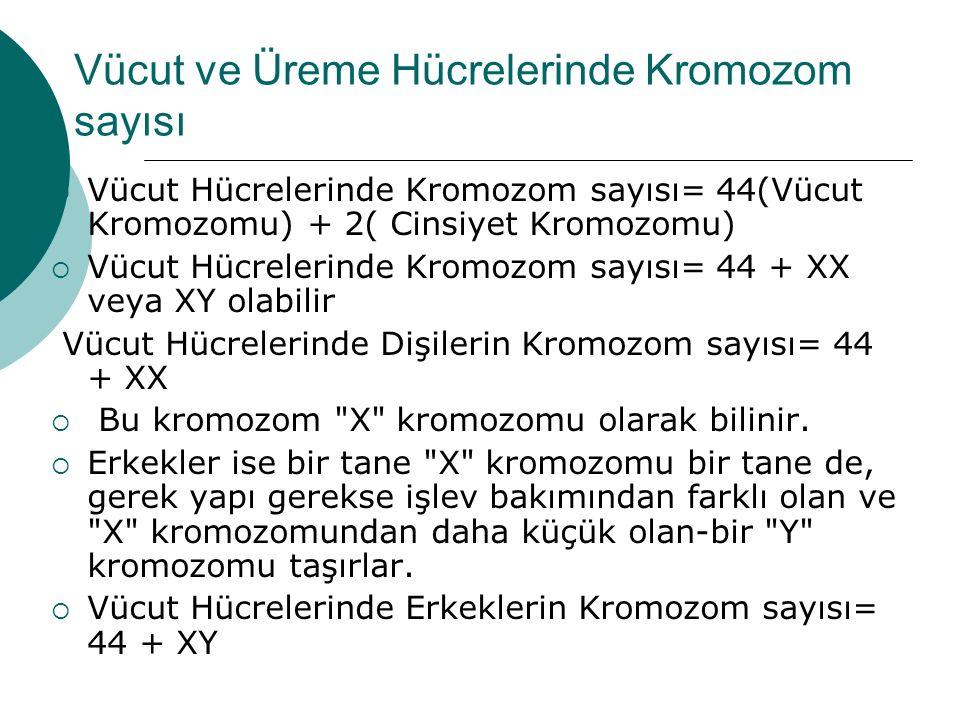 Vücut ve Üreme Hücrelerinde Kromozom sayısı