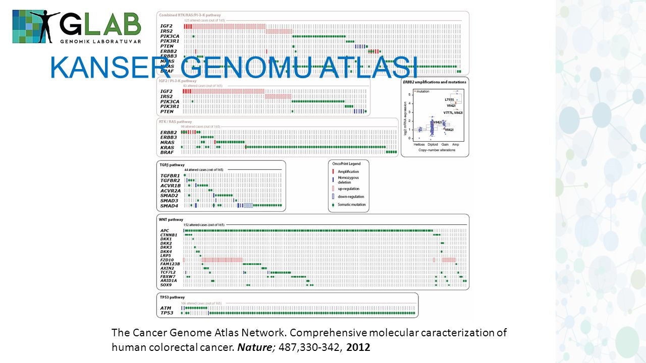 KANSER GENOMU ATLASI The Cancer Genome Atlas Network.