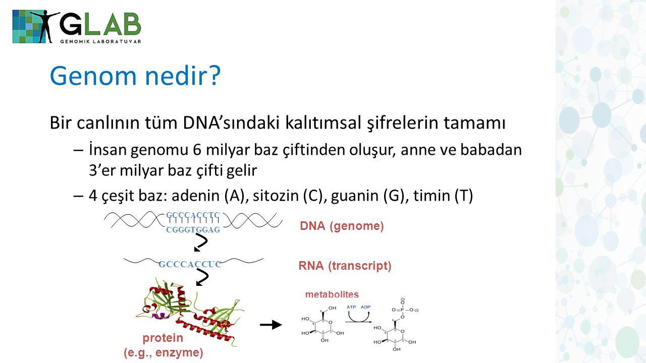 Genom nedir Bir canlının tüm DNA'sındaki kalıtımsal şifrelerin tamamı