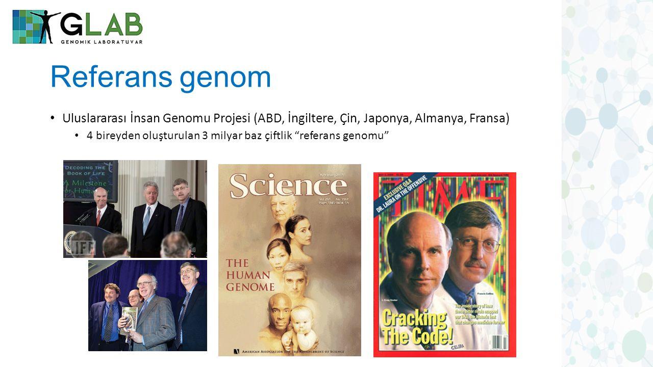 Referans genom Uluslararası İnsan Genomu Projesi (ABD, İngiltere, Çin, Japonya, Almanya, Fransa)