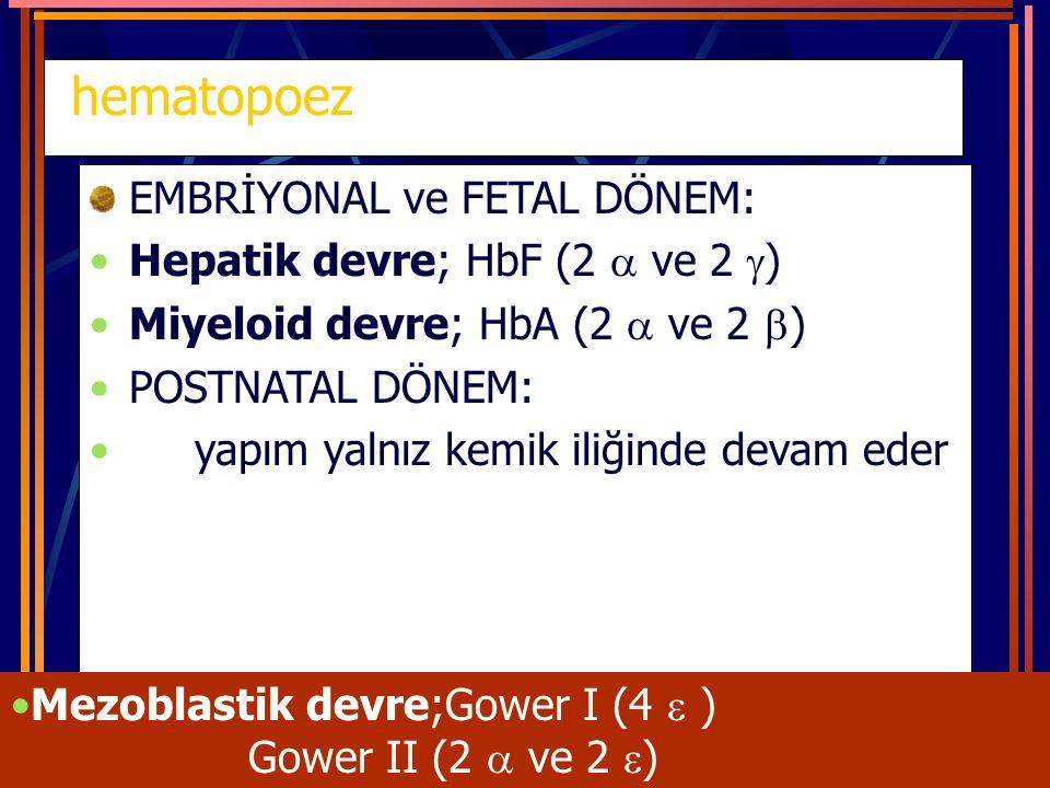 hematopoez EMBRİYONAL ve FETAL DÖNEM: Hepatik devre; HbF (2  ve 2 )
