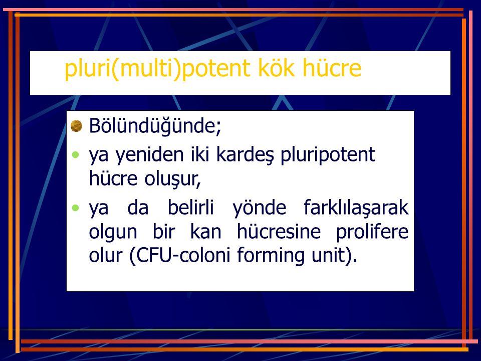 pluri(multi)potent kök hücre