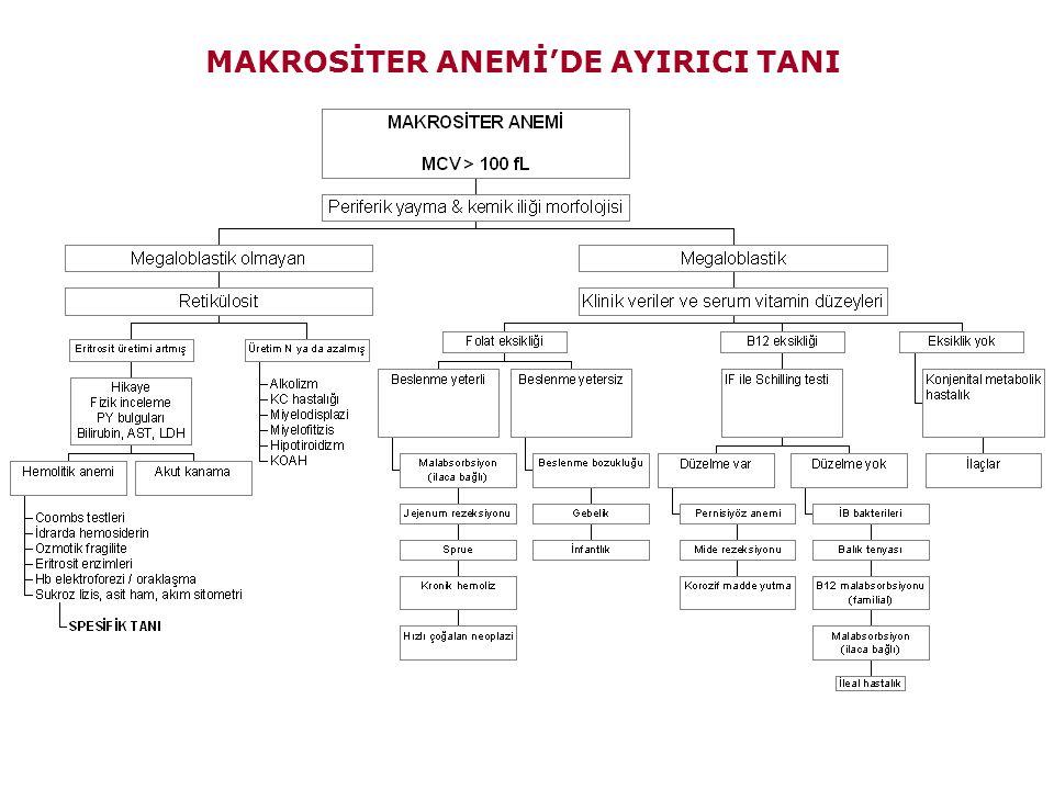MAKROSİTER ANEMİ'DE AYIRICI TANI