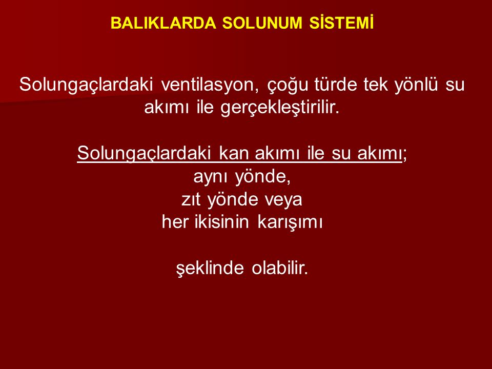 BALIKLARDA SOLUNUM SİSTEMİ