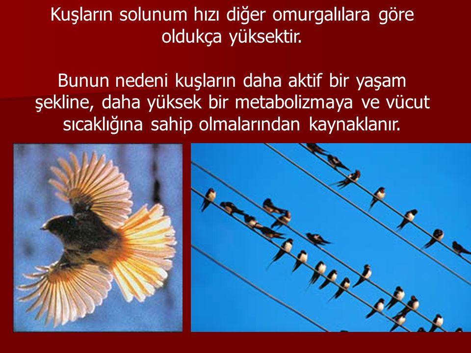 Kuşların solunum hızı diğer omurgalılara göre oldukça yüksektir.