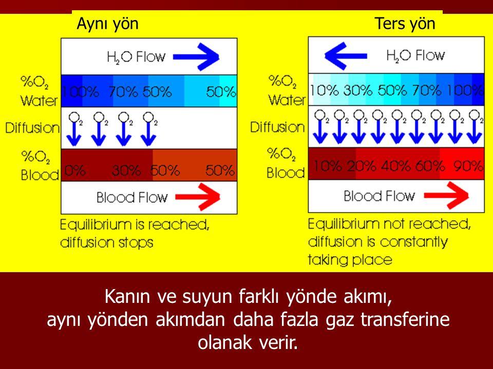 Kanın ve suyun farklı yönde akımı,