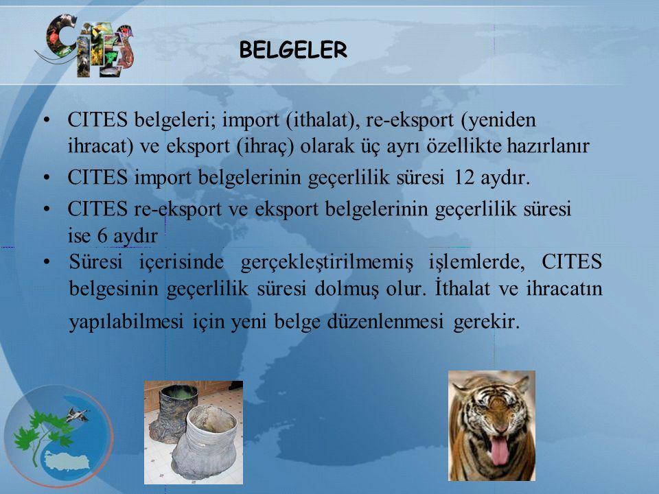 BELGELER CITES belgeleri; import (ithalat), re-eksport (yeniden ihracat) ve eksport (ihraç) olarak üç ayrı özellikte hazırlanır.