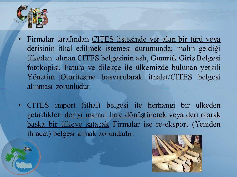 Firmalar tarafından CITES listesinde yer alan bir türü veya derisinin ithal edilmek istemesi durumunda; malın geldiği ülkeden alınan CITES belgesinin aslı, Gümrük Giriş Belgesi fotokopisi, Fatura ve dilekçe ile ülkemizde bulunan yetkili Yönetim Otoritesine başvurularak ithalat/CITES belgesi alınması zorunludur.
