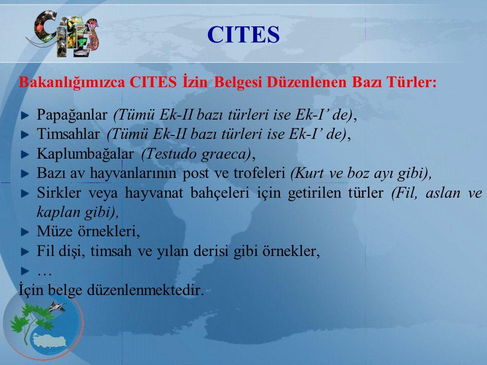 CITES Bakanlığımızca CITES İzin Belgesi Düzenlenen Bazı Türler: