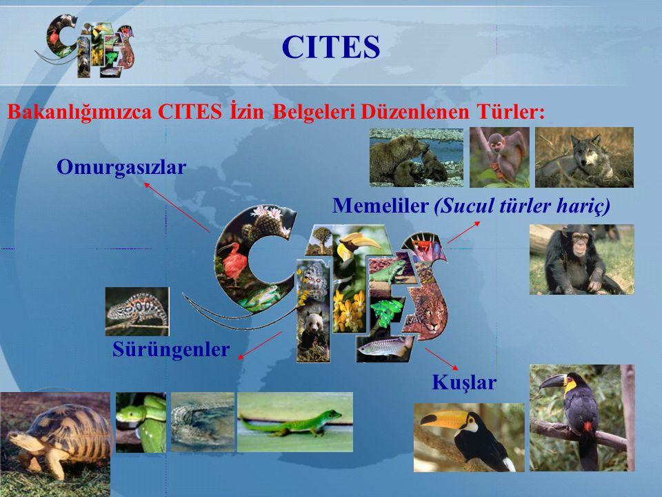 CITES Bakanlığımızca CITES İzin Belgeleri Düzenlenen Türler: