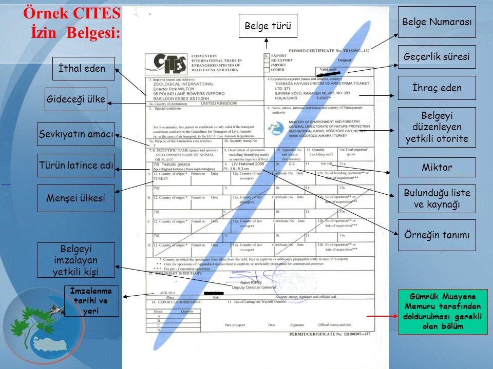CITES Örnek CITES İzin Belgesi: Belge Numarası Belge türü