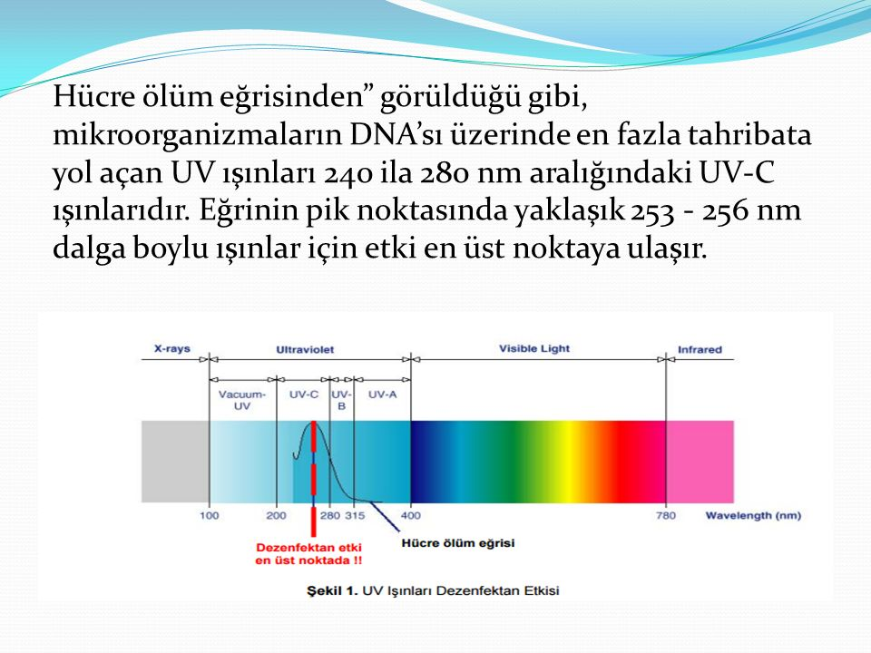 Hücre ölüm eğrisinden görüldüğü gibi, mikroorganizmaların DNA'sı üzerinde en fazla tahribata yol açan UV ışınları 240 ila 280 nm aralığındaki UV-C ışınlarıdır.