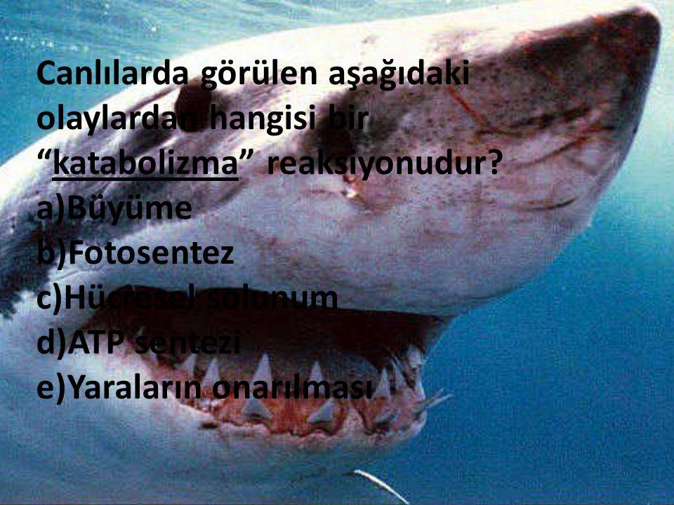 Canlılarda görülen aşağıdaki olaylardan hangisi bir katabolizma reaksiyonudur
