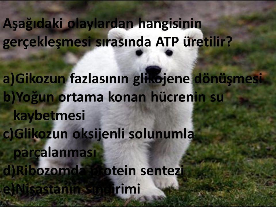 Aşağıdaki olaylardan hangisinin gerçekleşmesi sırasında ATP üretilir