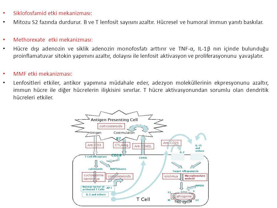 Siklofosfamid etki mekanizması: