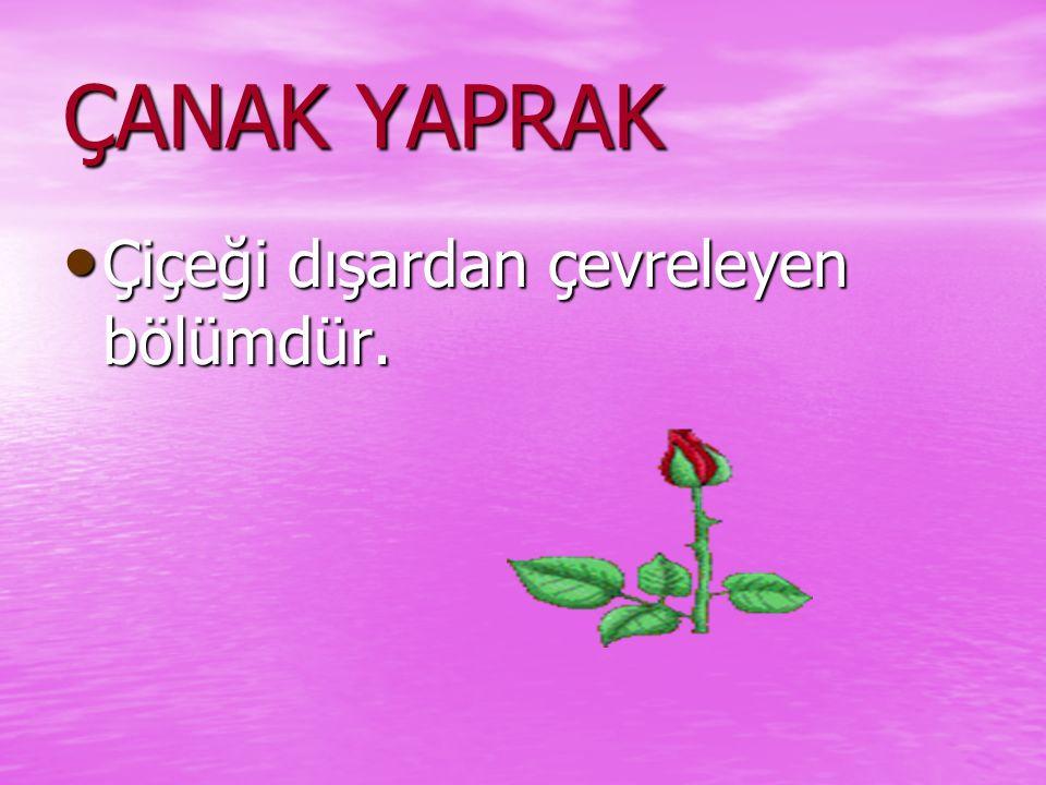 ÇANAK YAPRAK Çiçeği dışardan çevreleyen bölümdür.