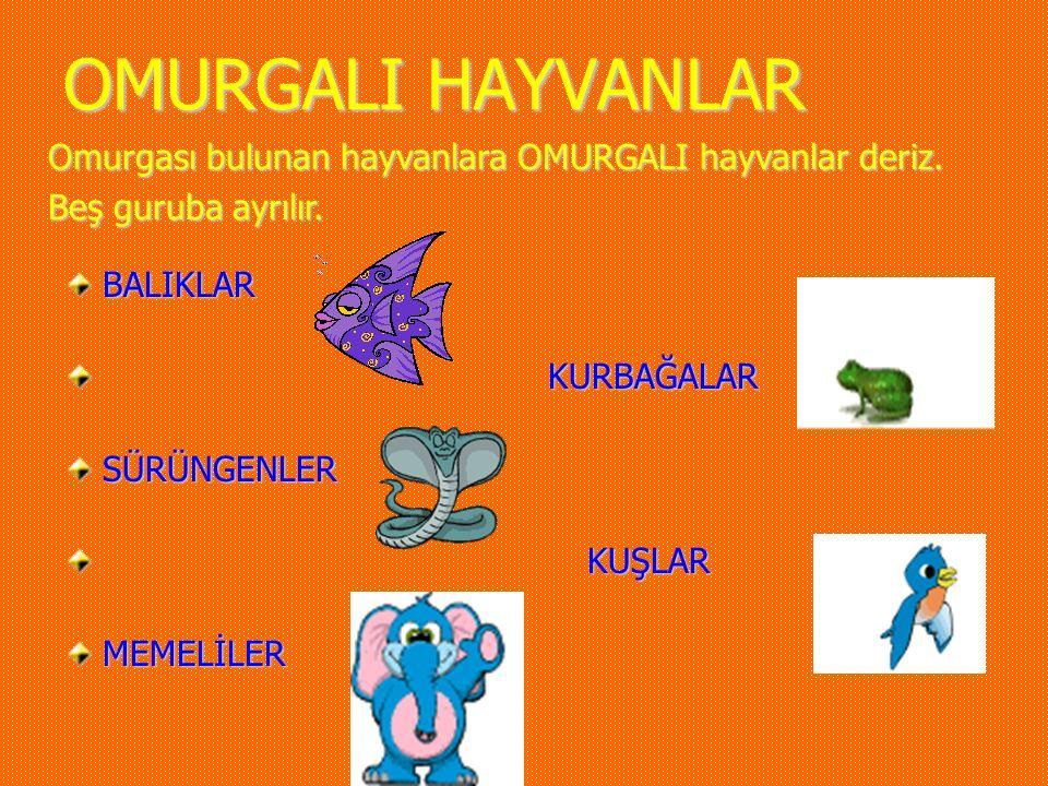 OMURGALI HAYVANLAR Omurgası bulunan hayvanlara OMURGALI hayvanlar deriz. Beş guruba ayrılır. BALIKLAR.