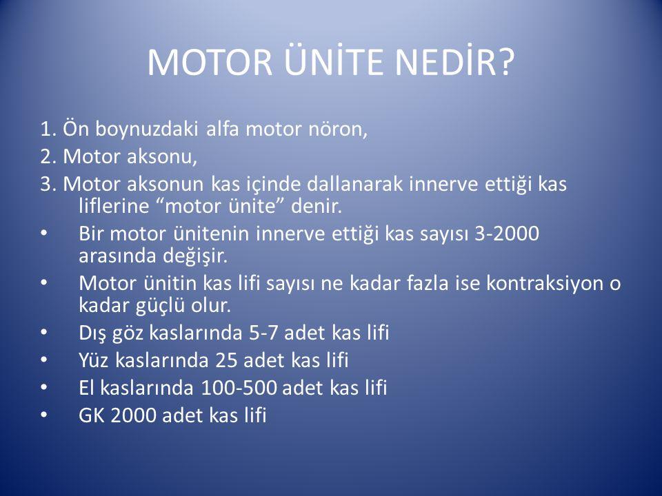 MOTOR ÜNİTE NEDİR 1. Ön boynuzdaki alfa motor nöron, 2. Motor aksonu,