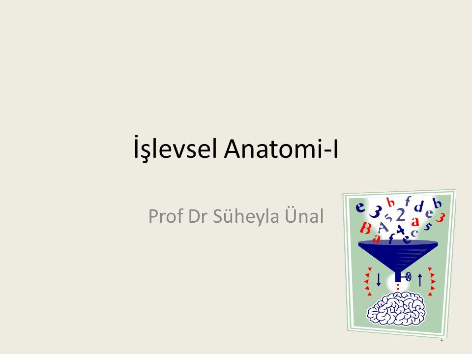 İşlevsel Anatomi-I Prof Dr Süheyla Ünal
