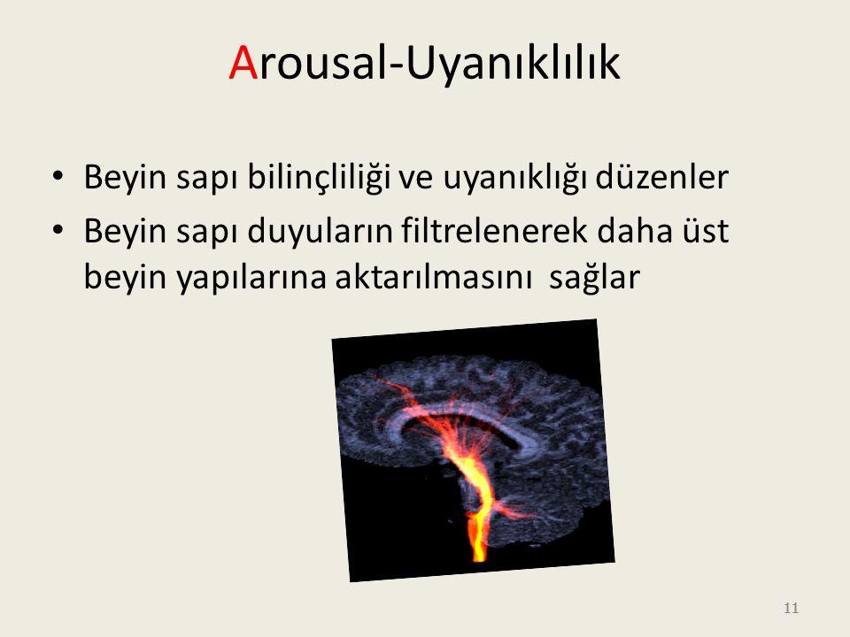 Arousal-Uyanıklılık Beyin sapı bilinçliliği ve uyanıklığı düzenler