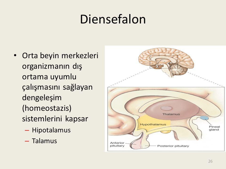 Diensefalon Orta beyin merkezleri organizmanın dış ortama uyumlu çalışmasını sağlayan dengeleşim (homeostazis) sistemlerini kapsar.