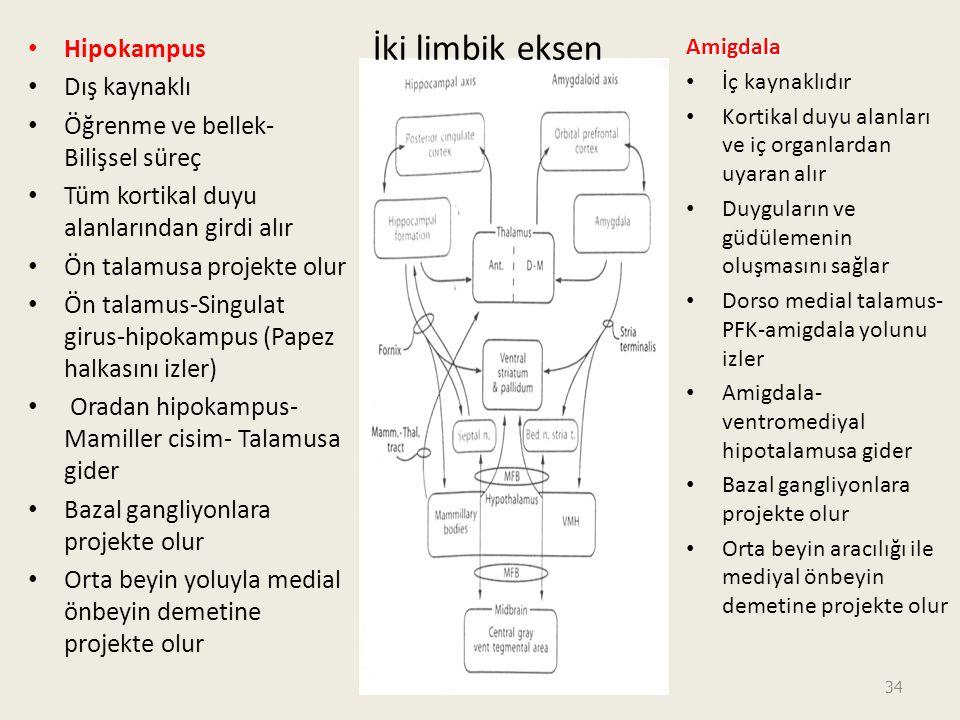 İki limbik eksen Hipokampus Dış kaynaklı