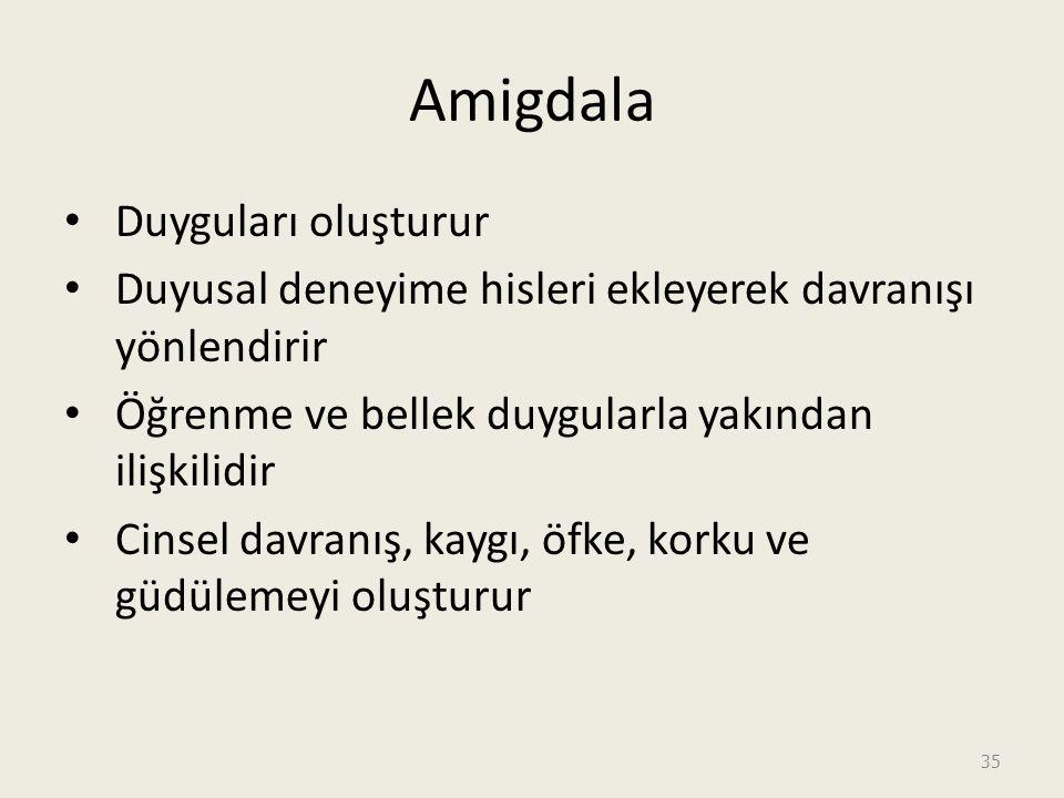 Amigdala Duyguları oluşturur