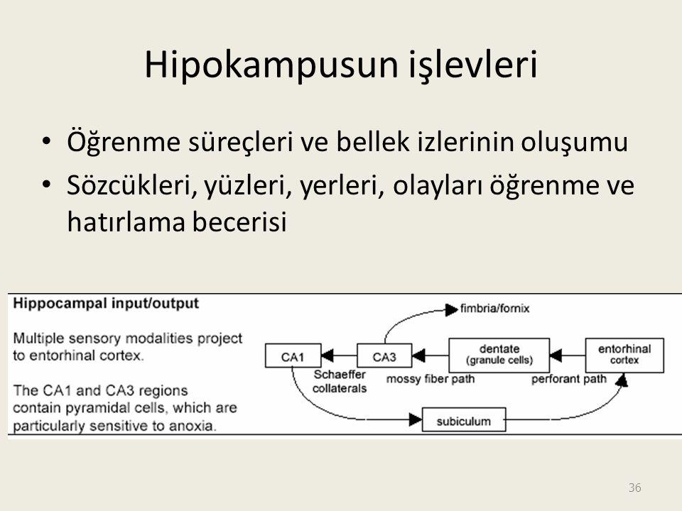 Hipokampusun işlevleri