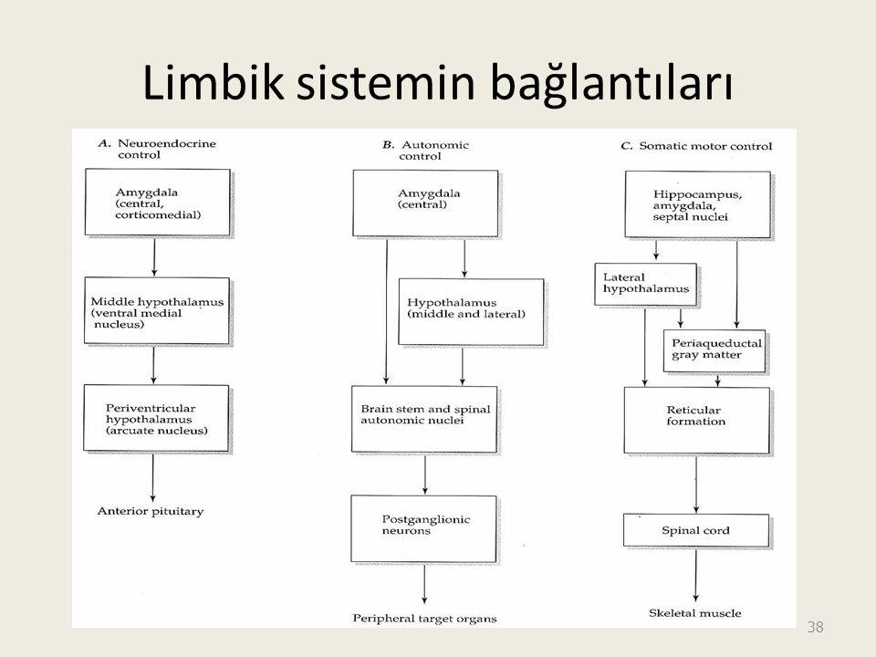 Limbik sistemin bağlantıları