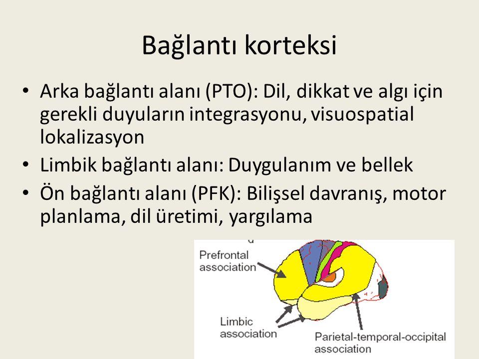 Bağlantı korteksi Arka bağlantı alanı (PTO): Dil, dikkat ve algı için gerekli duyuların integrasyonu, visuospatial lokalizasyon.