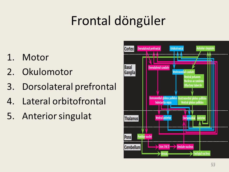Frontal döngüler Motor Okulomotor Dorsolateral prefrontal