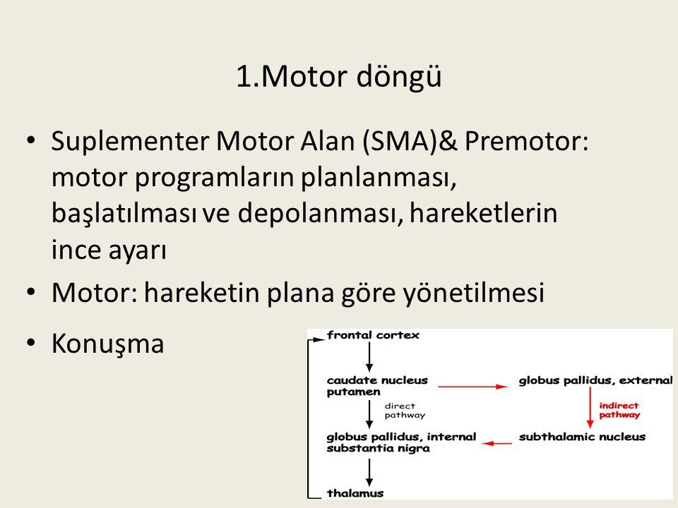 1.Motor döngü Suplementer Motor Alan (SMA)& Premotor: motor programların planlanması, başlatılması ve depolanması, hareketlerin ince ayarı.