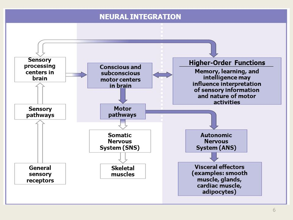 NEURAL INTEGRATION Higher-Order Functions