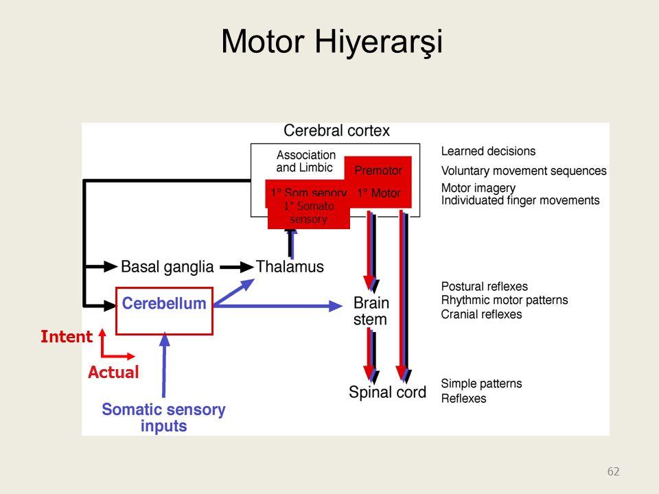 Motor Hiyerarşi 1° Somato sensory Intent Actual 62